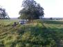 Apfelernte Hessen 2011