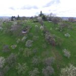 Frühling ruft