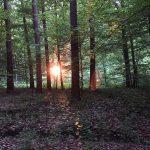Die Sonne versetzt den Wald in brand